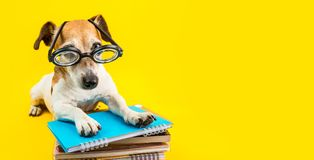 Adorable back to school dog banner. Yellow background. Dog in glasses Stock Image