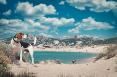 Free Adorable Beagle Dog On The Sandy Beach Under The Cloudy Sky Stock Photo - 200284410