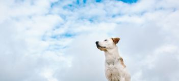Portrait of a dog looking away at blue sky. Adorable big dog looking away at clear sky Royalty Free Stock Image