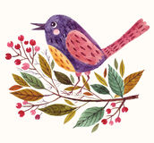 Adorable bird Stock Images