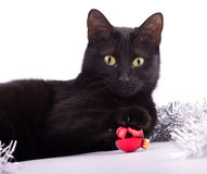 Adorable black cat with her paw on top of a red bauble Stock Photography