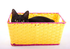 Adorable black cat hiding in a yellow basket Stock Photos