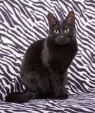 Adorable black cat sitting Royalty Free Stock Photo
