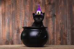 Adorable Black Halloween Witch Cat. Cute Black Halloween Witch Cat Royalty Free Stock Images