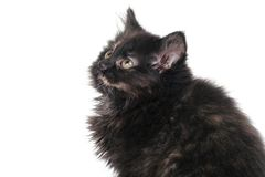 Adorable Black Kitten Royalty Free Stock Photos