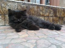 adorable black kitten lying on the floor stock photo