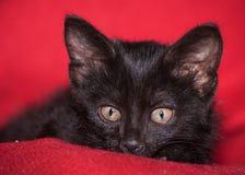 Adorable black kitten Stock Photography