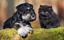 Adorable black puppy with a fluffy kitten outdoors Stock Image