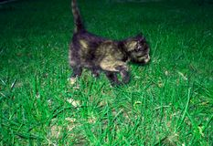 Adorable black yellow cat on green grass. Amazing kitty, sweer small pet, animal Stock Image