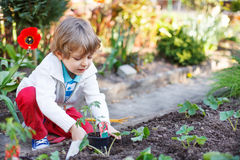 Adorable blond boy planting seeds and seedlings of tomatoes Royalty Free Stock Photos