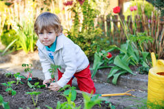 Adorable blond boy planting seeds and seedlings of tomatoes Stock Photo