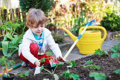 Adorable blond boy planting seeds and seedlings of tomatoes Royalty Free Stock Images