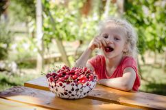 Child eating cherry fruit. Adorable blond girl eating cherry fruit in the garden royalty free stock images