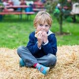 Adorable blond kid boy eating hot dog outdoors Stock Photos