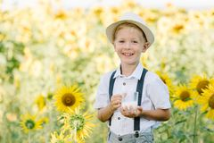 Adorable blond toddler boy funny eating bagel and drinking milk on summer sunflower field outdoors Stock Photography