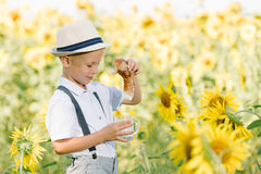 Adorable blond toddler boy funny eating bagel and drinking milk on summer sunflower field outdoors Royalty Free Stock Image