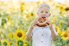 Adorable blond toddler boy funny eating bagel on summer sunflower field outdoors Royalty Free Stock Images