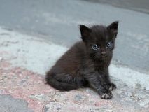 Adorable Blue Eyed Kitten Stock Photo