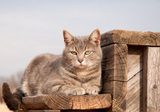 Adorable blue tabby cat resting on a wooden step royalty free stock photos
