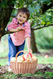 Adorable boy with a basket of apples Stock Photos