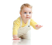Adorable boy crawls on all fours studio shot Royalty Free Stock Photos