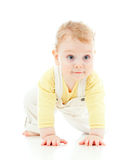 Adorable boy crawls on all fours studio shot. On white Royalty Free Stock Image