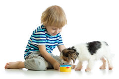 Adorable boy feeding a puppy royalty free stock image