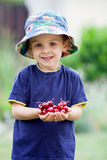 Adorable boy, holding cherries Stock Image