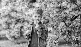 Adorable boy sniffing sakura tender flower. Confident stylish child enjoy warm spring day. Sakura garden concept. Child. Pink flowers of sakura tree background stock photos
