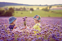 Adorable boys in purple field, holding flowers Royalty Free Stock Image