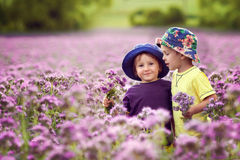 Adorable boys in purple field, holding flowers Royalty Free Stock Photography