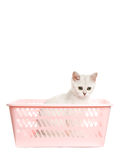 Adorable british kitten Royalty Free Stock Photos