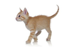 Adorable brown kitten Stock Photo