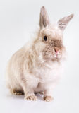 Adorable bunny Stock Photos