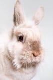 Adorable bunny Stock Photos