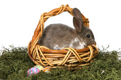 Adorable Bunny in Basket With Eggs on White Backgr Stock Images