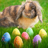Adorable bunny and Easter eggs Stock Photography