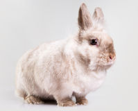 Adorable bunny indoors Stock Images