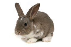 Adorable Bunny on White Background Stock Photos