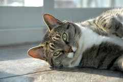 Adorable cat Stock Photography