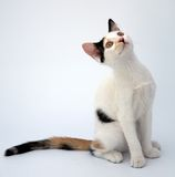 Adorable cat Stock Images