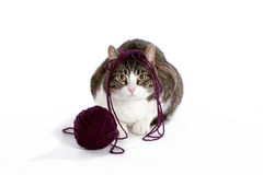 Adorable cat with ball of yarn Royalty Free Stock Photo