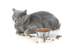 Adorable cat and bowl with food on white background royalty free stock photography