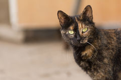 Adorable cat Stock Photo