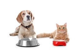 Adorable cat and dog near bowls. On white background. Animal friendship royalty free stock images