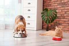 Adorable cat and dog near bowls at home royalty free stock photo