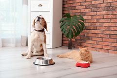 Adorable cat and dog near bowls at home stock images