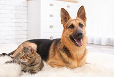 Adorable cat and dog resting together on fuzzy rug royalty free stock photography