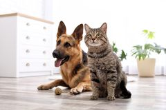 Adorable cat and dog resting together at home stock photo