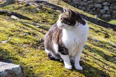 Adorable cat at Himeji castle garden area in Hyogo prefecture, J royalty free stock photo